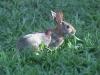 bunnyfeed3