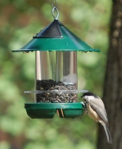attract more goldfinches