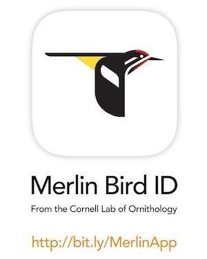 merlin bird ID